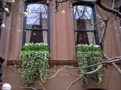westvillage-newyorkcity-tulips-ivy-windowbox-brownstone