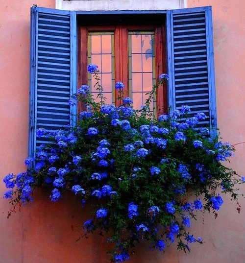 window-planter-box-pretty